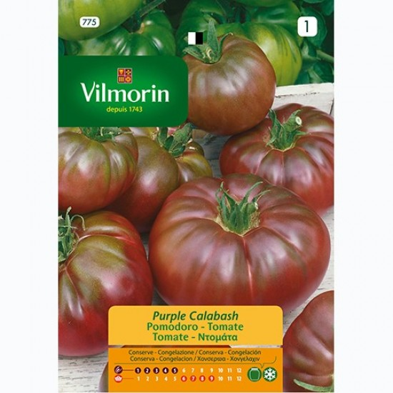 Semilla Tomate Purple Calabash